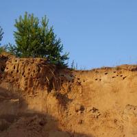 Улучшаем песчаные почвы