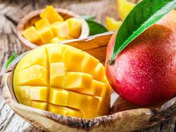 Сложно ли вырастить манго из косточки?