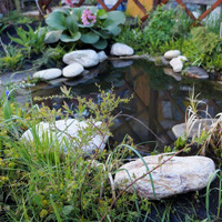 Озеленение пластикового пруда: 3 составляющие
