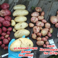 Картошка-картошка, какая тебе честь кабы не было картошки, чтобы стали есть...