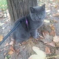 Жизнь вне дачи, или как научить коТишку гулять на шлейке?