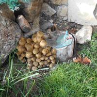 А в садочке у Егорыча выросли грибочки!