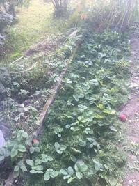 Как сделать так, что бы возле грядок не росли сорняки?