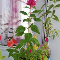 Название растения?