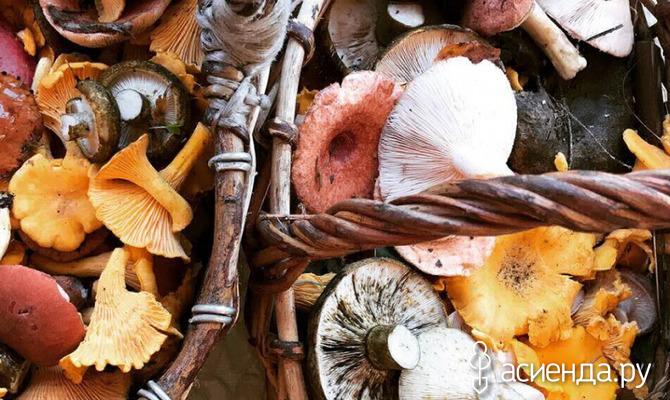 Чем хороши удобрения из грибов?
