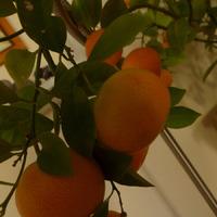 Мой мини апельсин