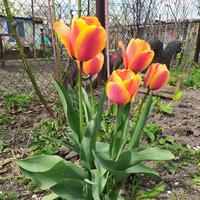 Мои цветочки - 12-04-20