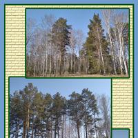 Начало дачного сезона на сибирской даче.