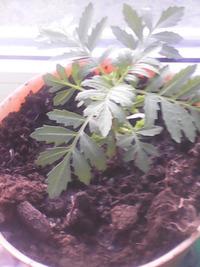 Мой. сад