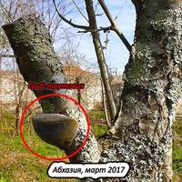 Причина и предотвращение гибели деревьев в саду.