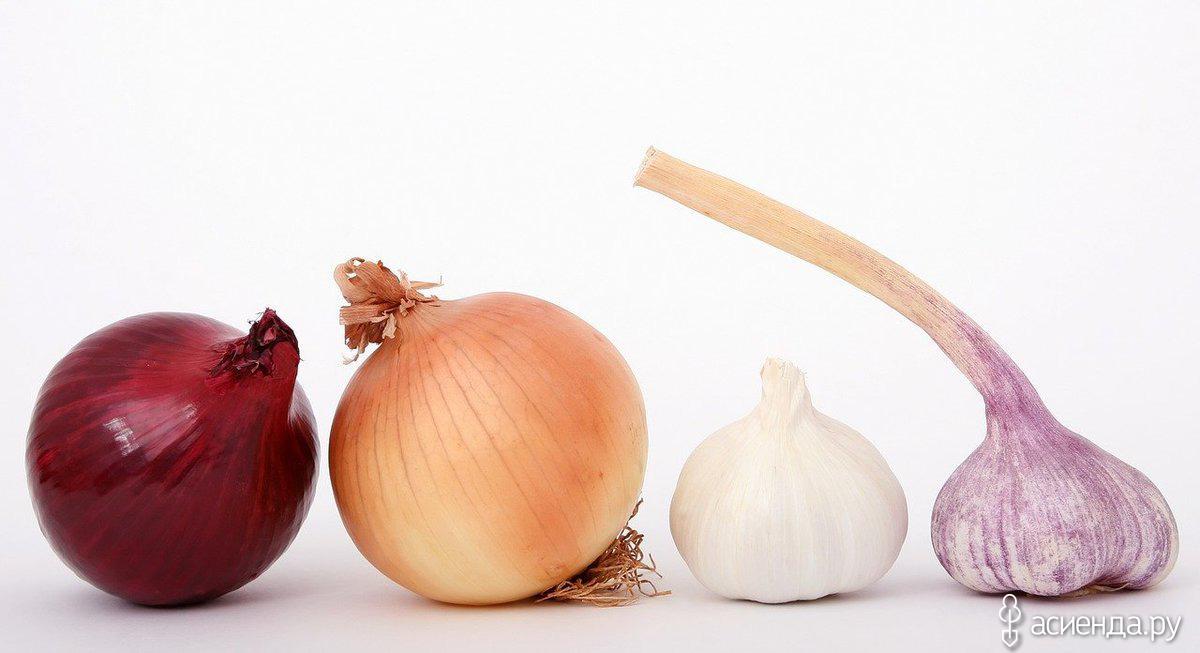 Лук и чеснок: уборка урожая и хранение