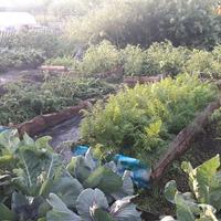 Экскурсия по саду-огороду. Продолжение