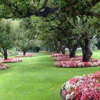 Яблони в саду. Что вы сажаете для их пользы и красоты сада?