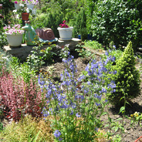 Предлагаю семена многолетних цветов