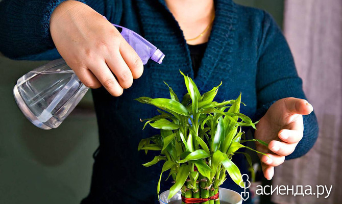 Выращивание комнатных растений: полезные лайфхаки