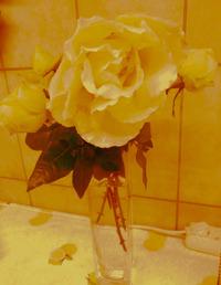 Розы в феврале