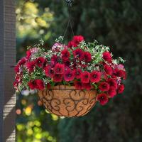 Лучшие ампельные цветы для кашпо