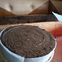 Посев в улитки.