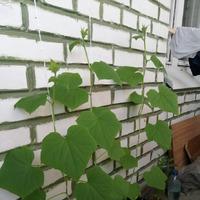 Мое балконное садоводство.