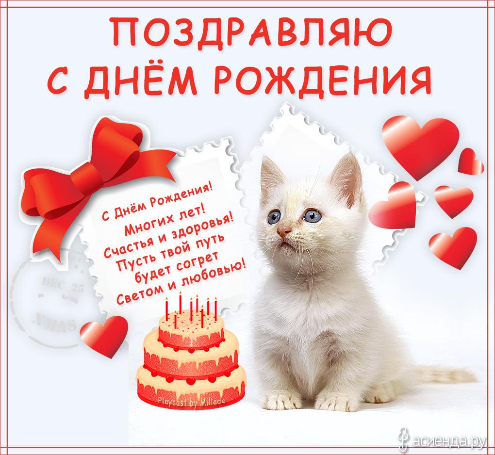 С днем рождения картинки кисы