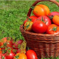 Топ лучших сладких томатов