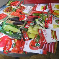 Продам излишки семян перца производства Сербии. Часть вторая.