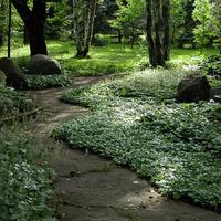 Чем заменить газон в тенистом саду