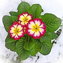 Особенности размножения комнатных цветов семенами
