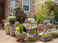 Правила выращивания в уличных горшках, вазонах, кашпо