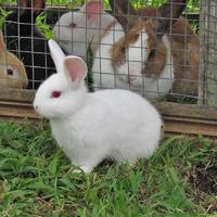 Основные правила содержания кроликов в клетках