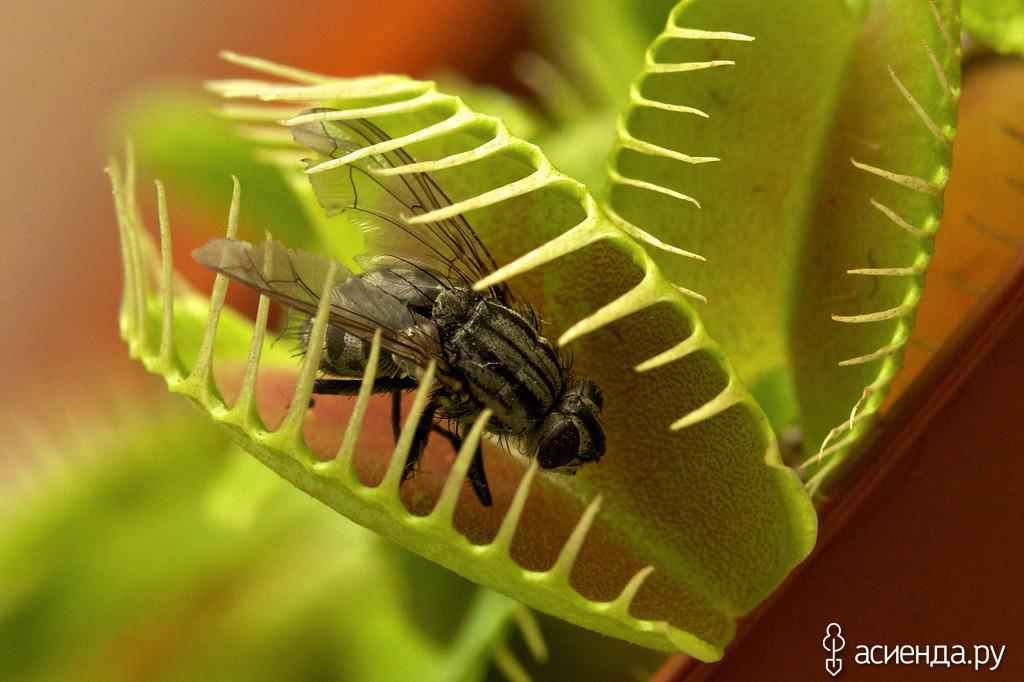 Избавляемся от мух в доме