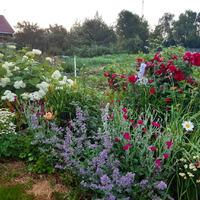 Во саду ли? -в огороде.