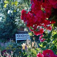 Садовый альбом. Часть 3. Розы