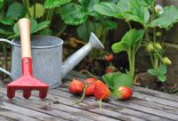 Подкормка клубники в период плодоношения