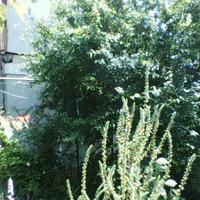 8 июня 2020 г Одесса. Украина. Готовим сани летом.