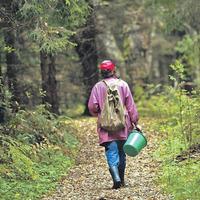 Как ориентироваться в лесу