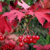 Лучшие кустарники для украшения осеннего сада