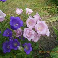 Середина июня, буйство красок и ароматов в саду.