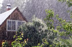 Как защитить растения от затяжных дождей