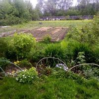 Организация пространства на огороде. Каждому овощу-коробочку! :)