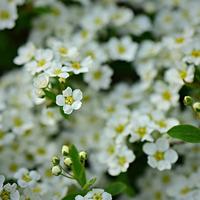 Неприхотливые цветы для посева сразу в грунт