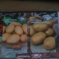 Эксперимент с картошкой