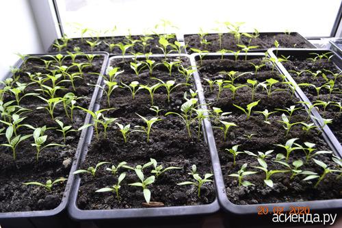 таблетки для рассады томатов