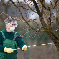 Обработка плодовых деревьев весной