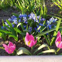 Первоцветы - продолжение (23марта)