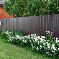 Что посадить за забором