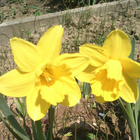 Начало мая- хочется цветов!