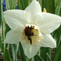 И к нам пришла весна (или лето?)