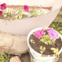 Цветут цветы, и ни по чем им майский холод