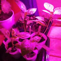 Поговорим о фитолампах для растюх?